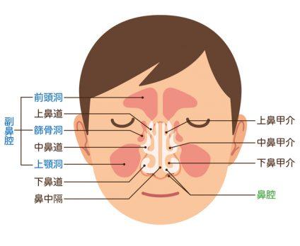 鼻腔の構造