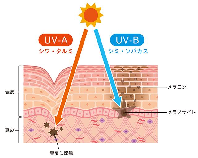 紫外線 UVA UVB